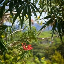 Jamaican Flower