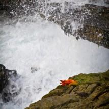 Waterfall Flowerbud